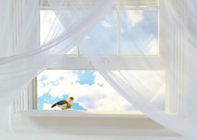00001 Predelava oken
